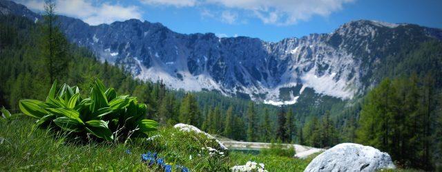 Prächtige Bergwelt in Kärntens Südosten, an der Grenze zu Slowenien Die Petzen als Teil der imposanten Berglandschaft der Karawanken spricht Wanderer und Bergliebhaber ebenso an, wie Mountainbiker, Paragleiter und Besucher, die einfach gerne …