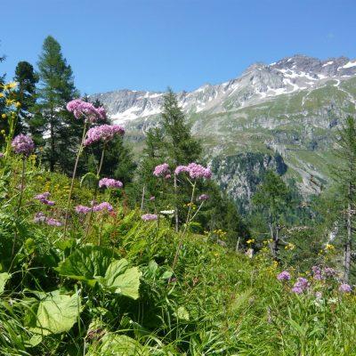 Die Möglichkeiten zu wandern und zu alpinen Bergtouren aufzubrechen sind vielfältig