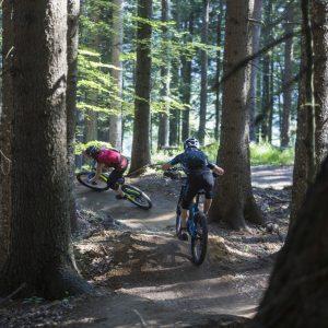 Weissensee - auf Naturtrails geht durch den Wald talwärts
