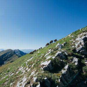 Almidylle am Goldeck | Foto: Goldeck Bergbahnen/Sam Strauss