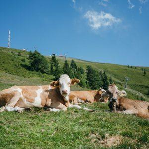 Alm-Idylle am Goldeck | Foto: Goldeck Bergbahnen/Sam Strauss